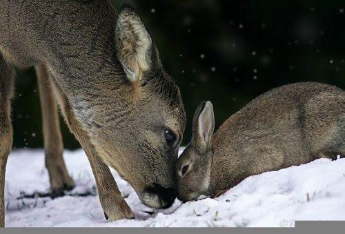 DeerRabbit1.jpg