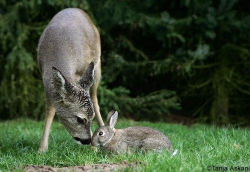 DeerRabbit8.jpg