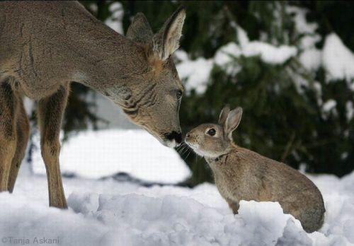 DeerRabbit9.jpg
