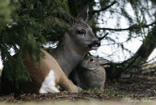 DeerRabbit3.jpg