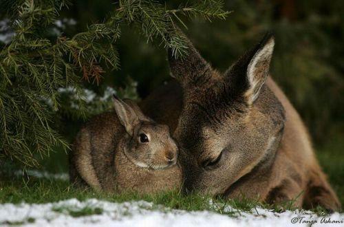DeerRabbit11.jpg