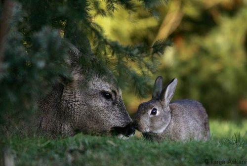 DeerRabbit4.jpg